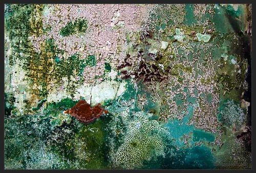 Julia - Water Lilies 1
